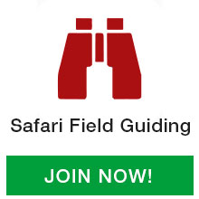 Safari-Field-Guiding
